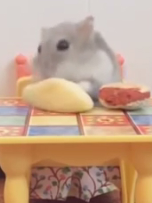 Super HARD TRY NOT TO LAUGH CHALLENGE Funny ANIMAL compilation