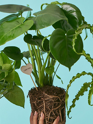 5 Tips to Keep Your Plants Happy When you are Away